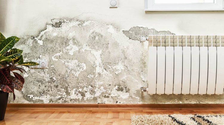 Como remover o mofo da parede: passo a passo prático