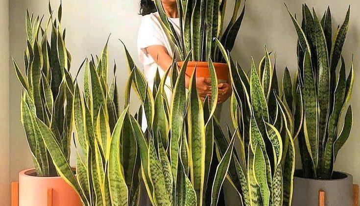 Tipos de vasos para a sua decoração